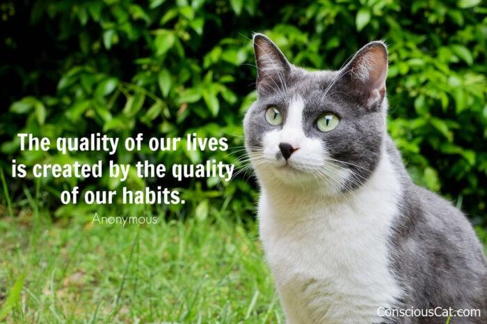 cat-habits-quote