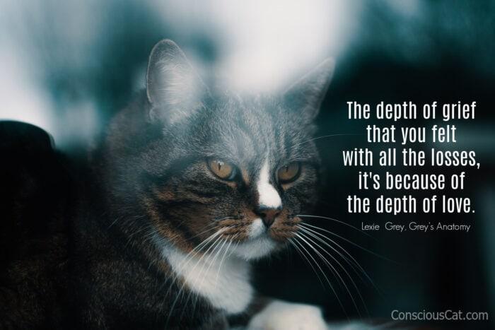 cat-window-sad