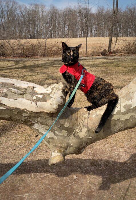 cat-leash-harness-park