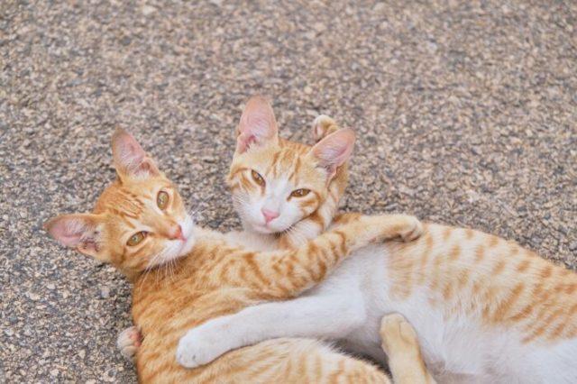 orange-tabby-cats