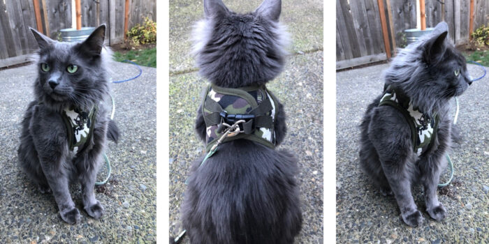 cat-on-harness