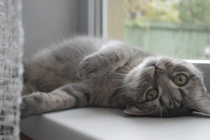 cat-window-screen