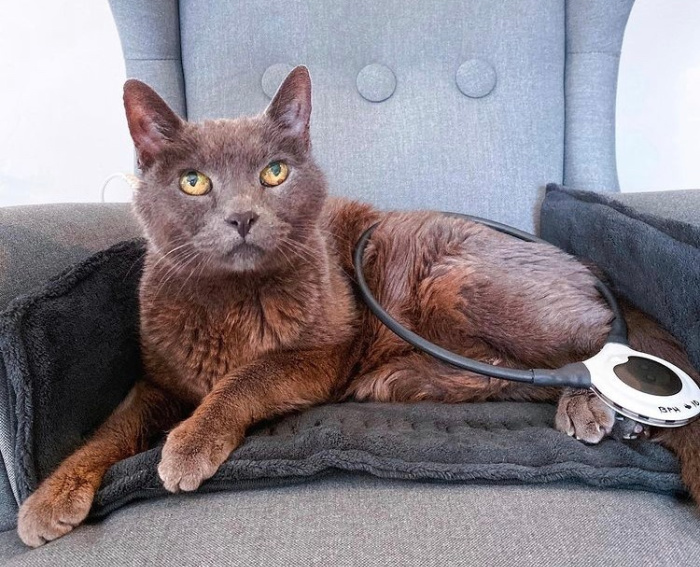 assisi-loop-cat-on-chair