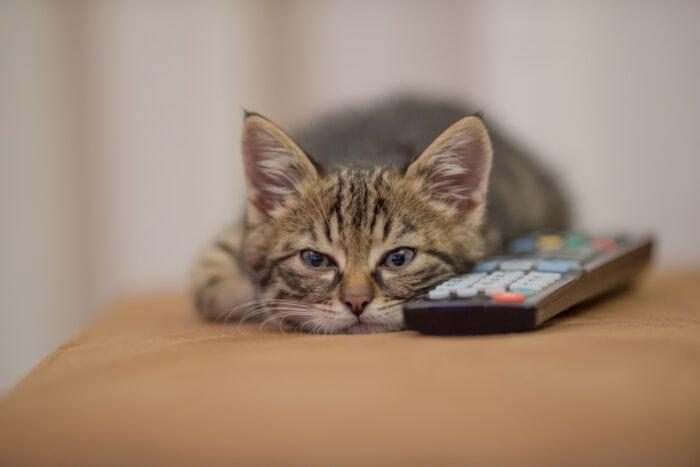 cat-remote-control