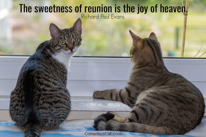 two-cats-reunion