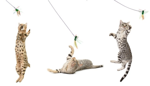 wand-toys-bengal-cats