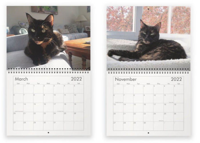 calendrier-mur-chat-conscient