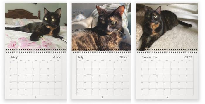 consciouscat-wall-calendar