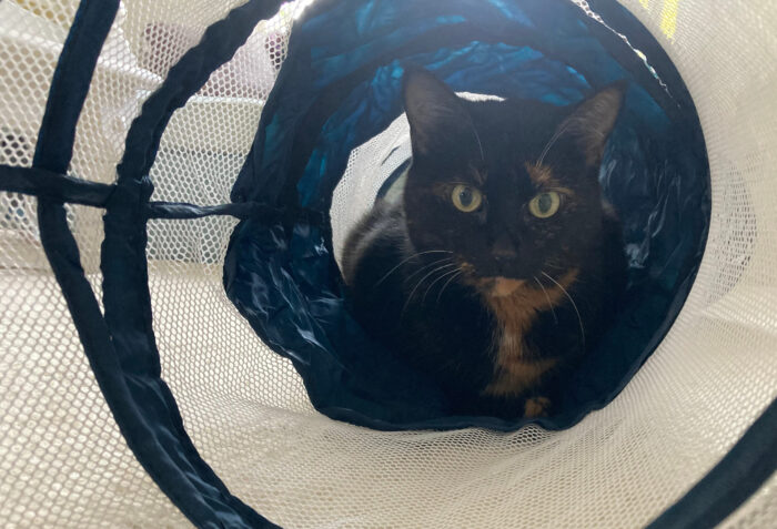 chat-tunnel