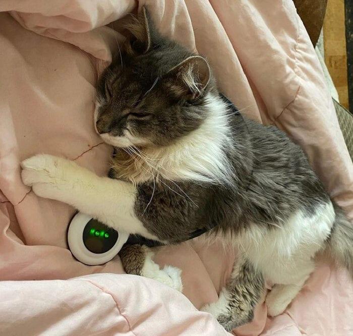 assisi -loop-cat
