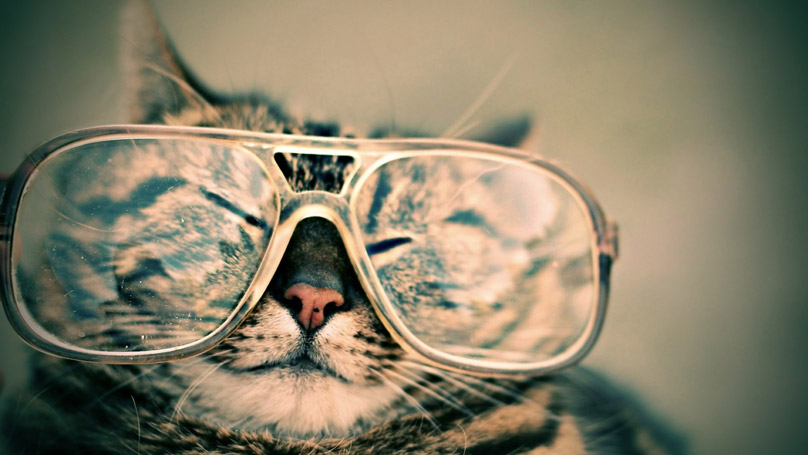 happy cat with glasses
