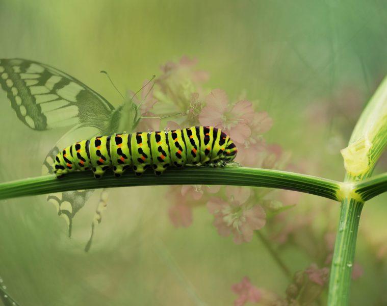 NESI forum butterfly