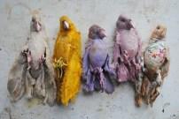 Textile Bird Collection
