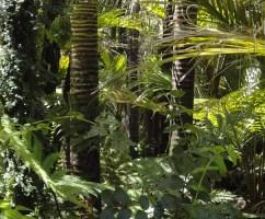 amazon conservation team ben lee