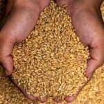 How Wheat Literally Decimates Your Health