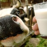 Historic Approach to Raw Milk Regulation Returns