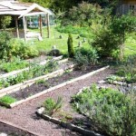 Keeping Slugs and Snails Off Your Veggies Compassionately