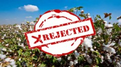 rejected cotton