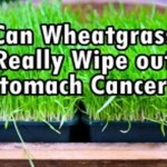 Did Wheatgrass Really Wipe Out a 74-Year Old's Stomach Cancer?