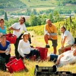 How You Can Travel the World & Learn About Organic Farming At The Same Time
