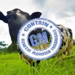 Kiss Your Grass-Fed Beef Goodbye! GMO Grass About to Be Approved