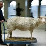 Biotech's Bizarre World: 7 Genetically Modified Animals