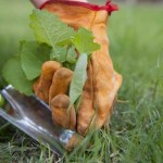 10 Easy Monsanto-Free Tips to Get Rid of Weeds