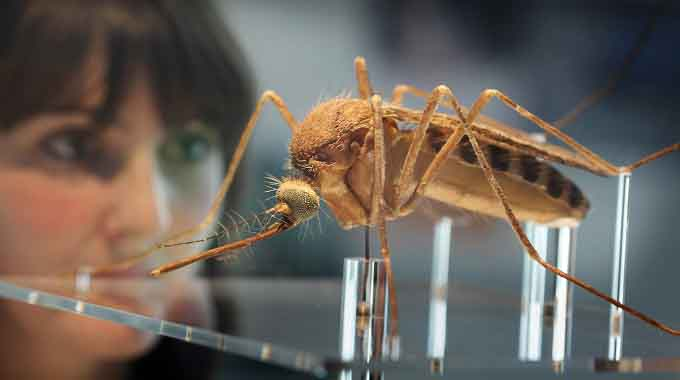 gm mosquito