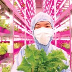 Japan's Answer to Radiation: Massive Natural Indoor Farms