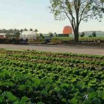 Watch How this Incredible Public Food Park Feeds 200,000 a Month