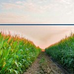 Anti-GMO Petition Receives 59,742,753 Signatures