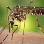 Mosquitoes Find You Irresistible? Find Out Why! (VIDEO)