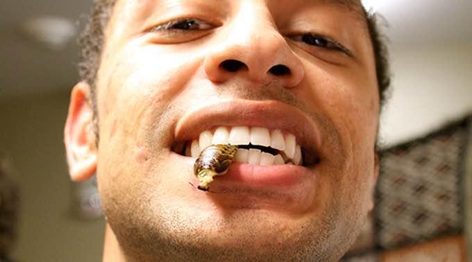 cam eats bugs
