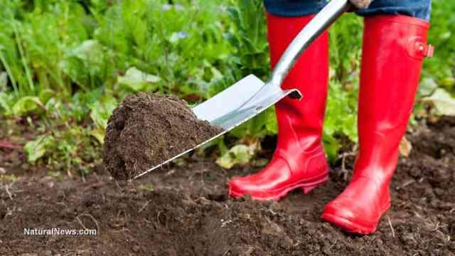 Gardening-Soil-Plant