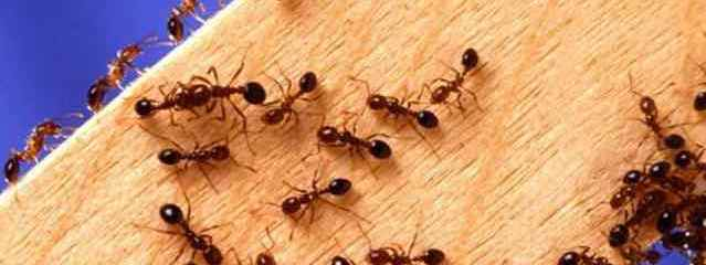 13 Natural Ways to Stop Ants From Invading Your Home