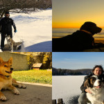 Things I Wish All Dog Owners Would Understand