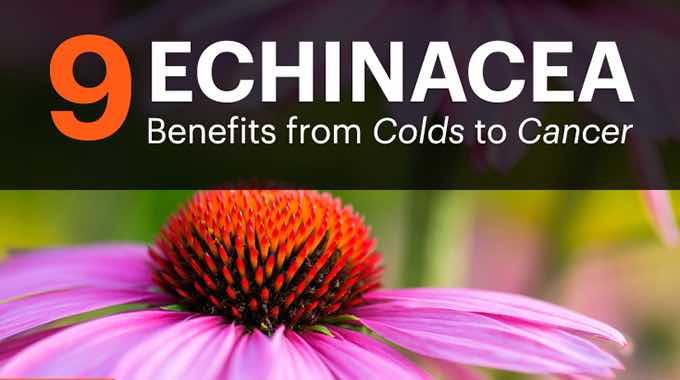 9 echinacea benefits