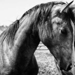 Horse Medicine: Healing Body, Mind, and Spirit
