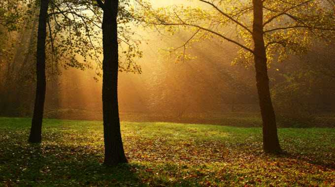 how-trees-heal-you