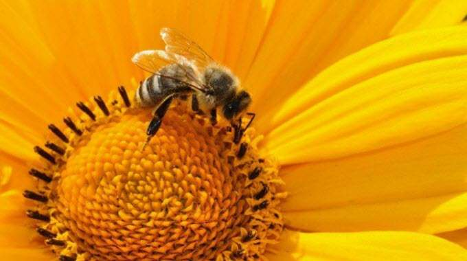 Norway-Creates-Worlds-First-Bee-Highway-to-Save-Endangered-Pollinators-compressed