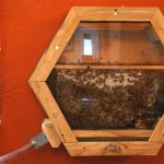 This Modular BEEcosystem Will Save the Bees and Bring Humans Closer to Them