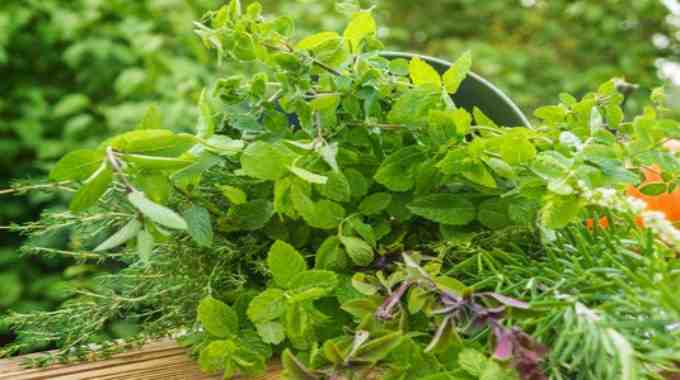 Herbs For Psychic Ability