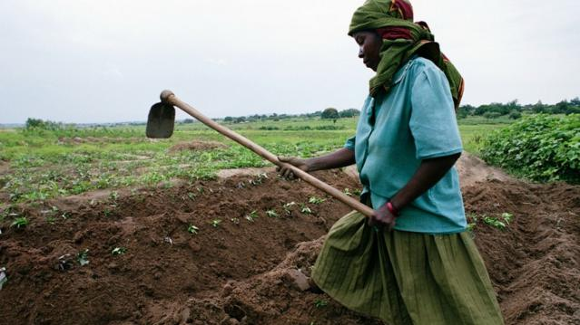 A farmer cultivates crops in Tanzania. (Photo: World Bank/flickr/cc)
