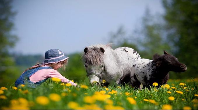 child-with-little-horses-compressed