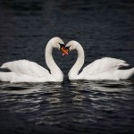 Twin Flame Relationships: When The Magic Hits the Fan