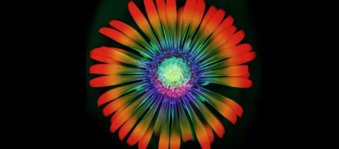 Sacred Plant Medicine: Taking Your Life from Good to Awesome