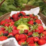 Are You Eating the Most Pesticide Contaminated Produce? Find Out The Worst & Best
