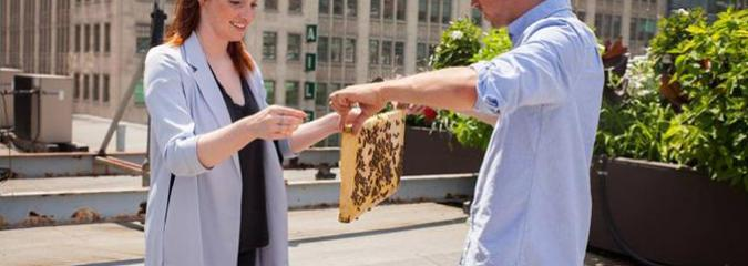 In An Effort to Save the Bees, These Guys Will Set Up a Hive for You Practically Anywhere
