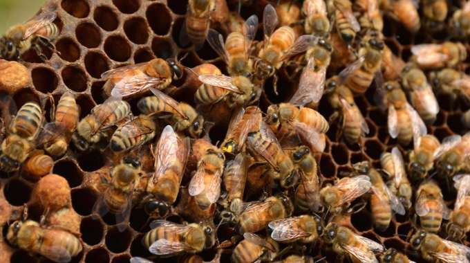 """""""In the five years since I started keeping bees, I've seen many hives killed by pesticides,"""" said James Cook, a beekeeper who drove the truck filled with dead bees from Sacramento, Calif., to Washington, D.C. (Photo: U.S. Geological Survey/flickr/cc)"""
