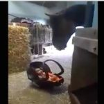 Amazing! This Horse Rocks the Cradle Every Time Baby Cries [Watch]